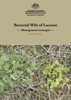 Bacterial Wilt of Lucerne Management strategies
